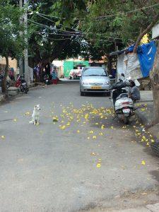 India-Day-5_1